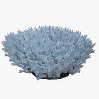 coral acropora_v5