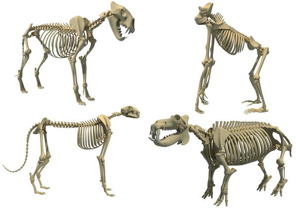 animal skeletons 3D model