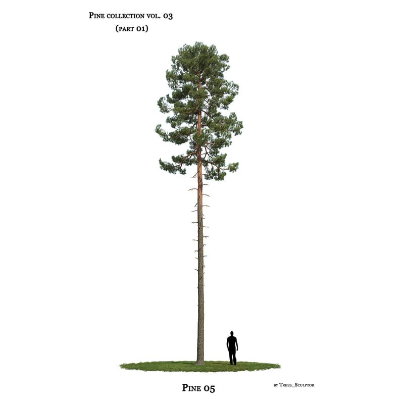 pine-tree tree 3D