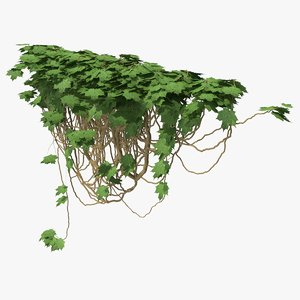ivy pbr branches 3D