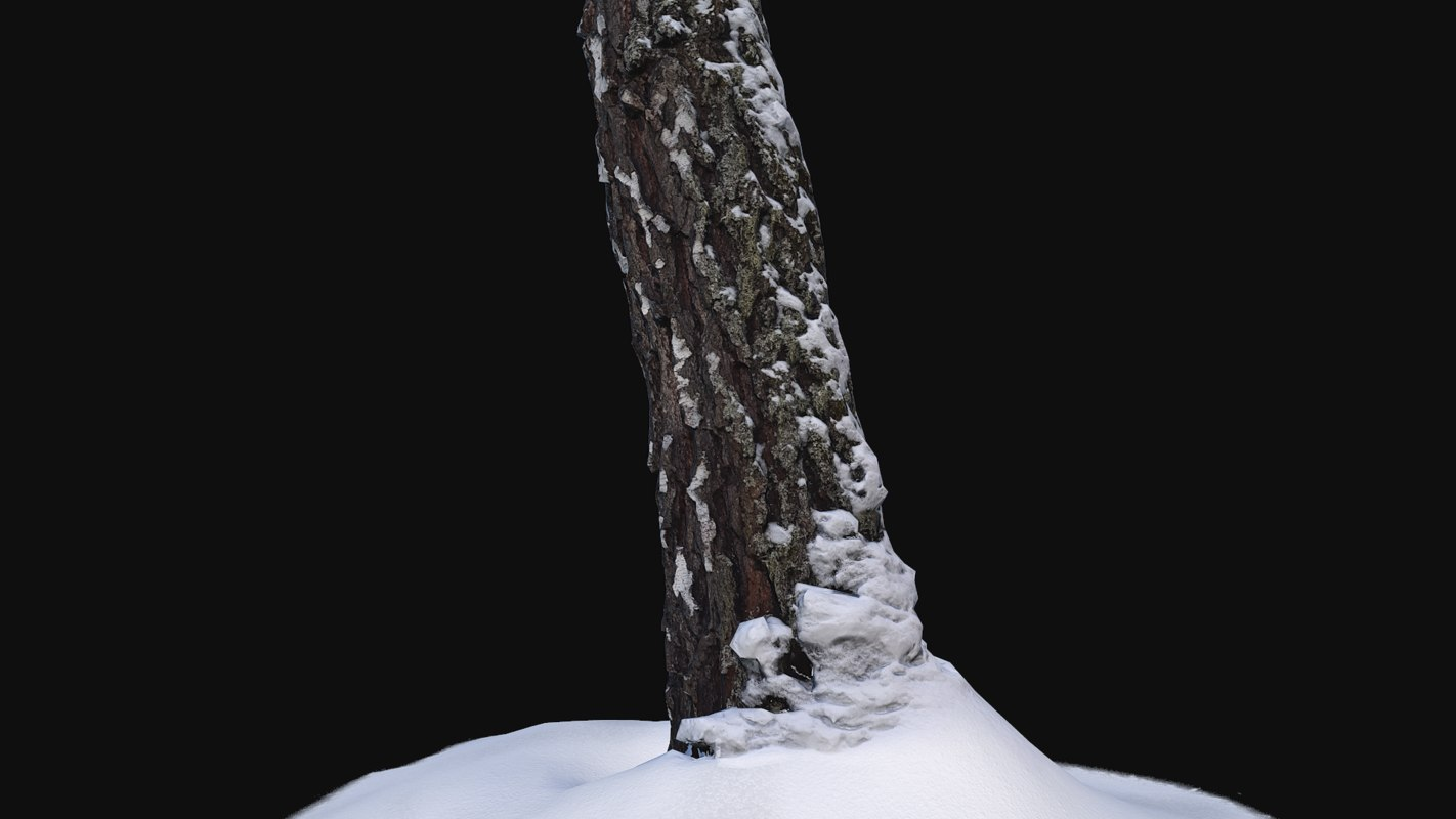 3D photoscan birch trunk snow