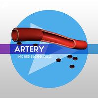 low-poly artery ready vr 3D model
