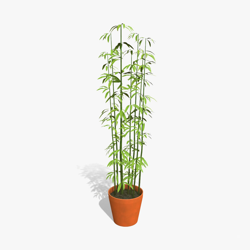 low-poly houseplant plant 3D model