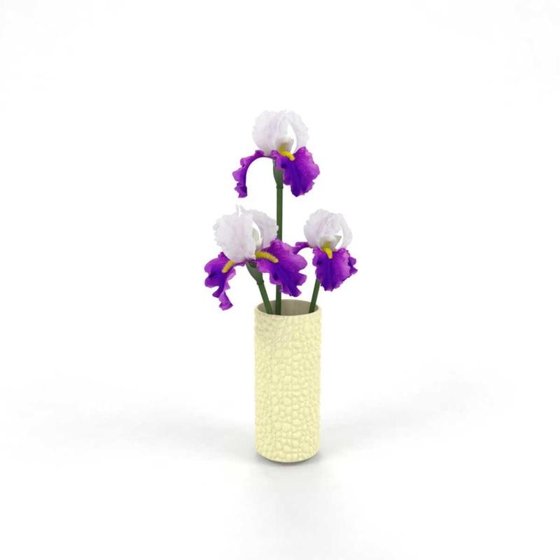 iris irises 3D model