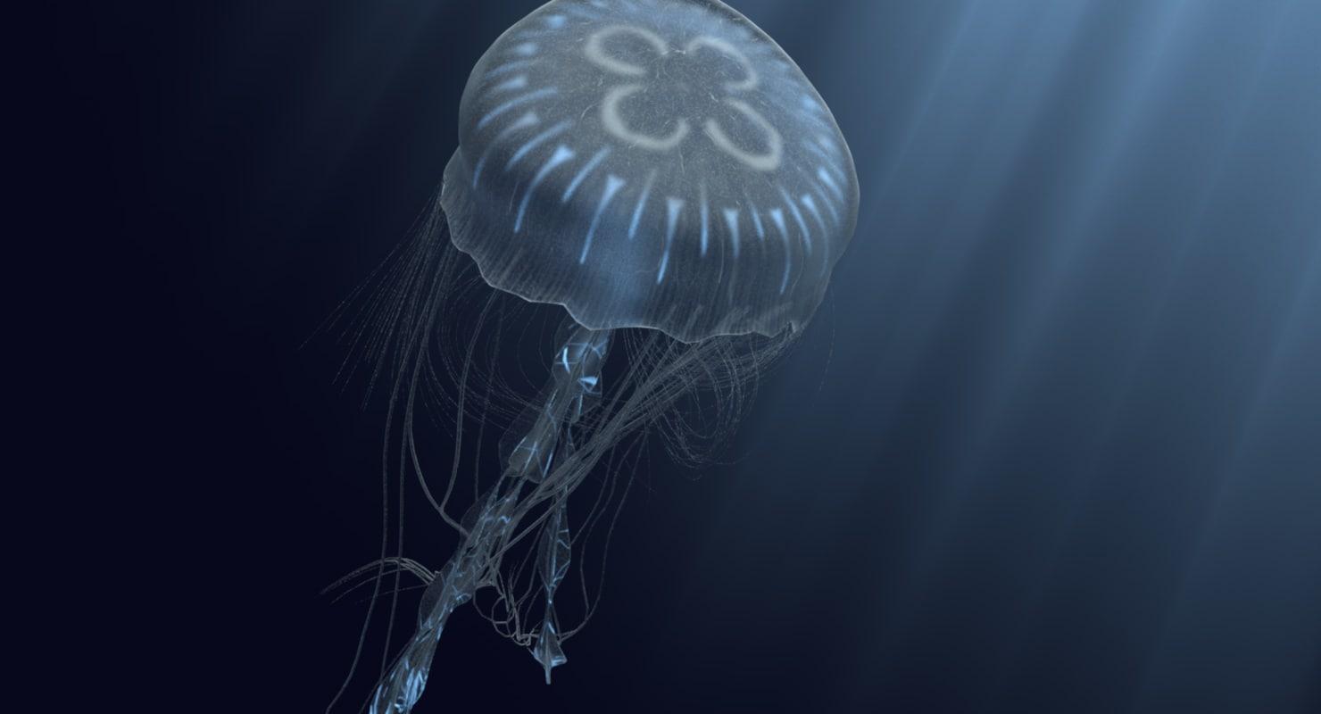 bioluminescent jellyfish model