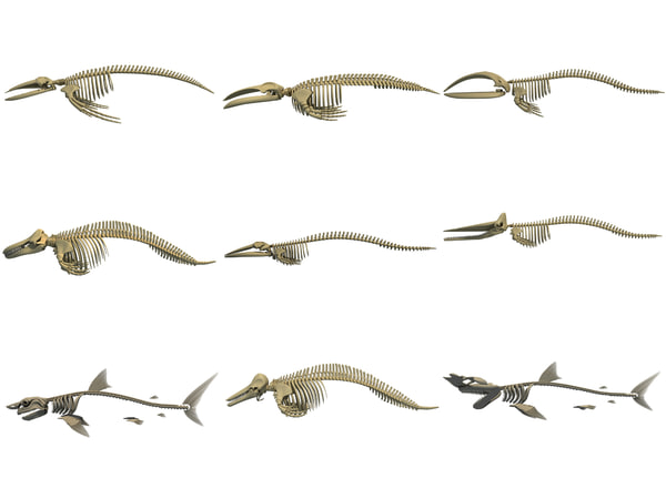3D whale shark skeletons