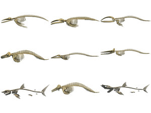 3D whale shark skeletons