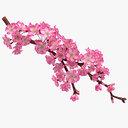 Realistic Sakura Branch