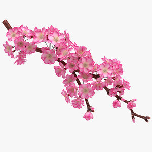 3D realistic sakura branch model