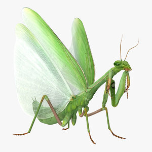 european mantis wings open 3D