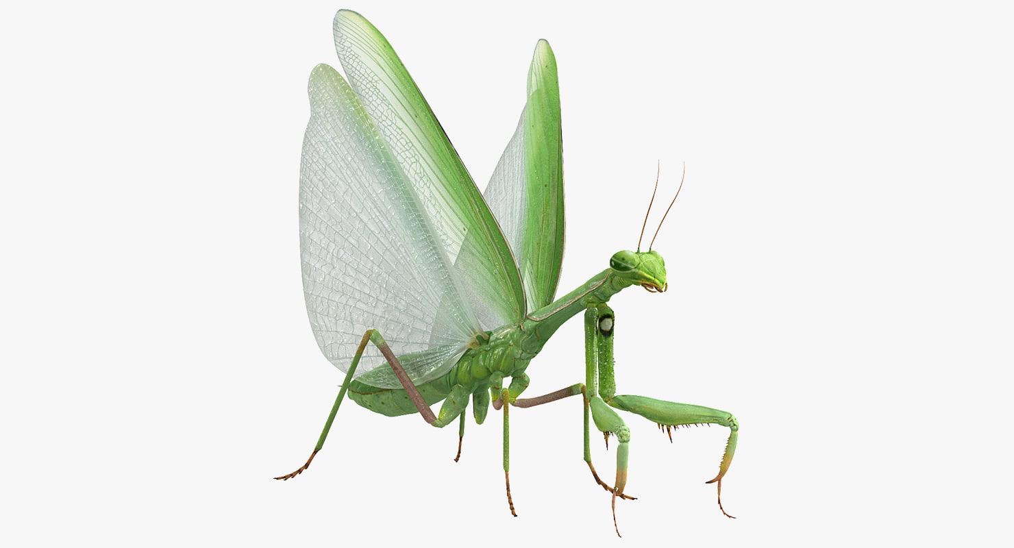3D european mantis