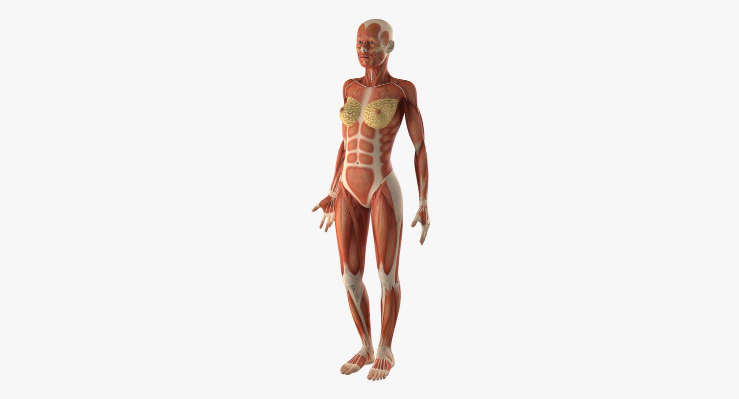 Ziemlich Nette 3d Anatomie Bilder - Anatomie Ideen - finotti.info