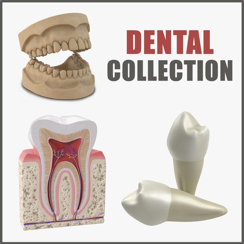 3D dental modeled human model