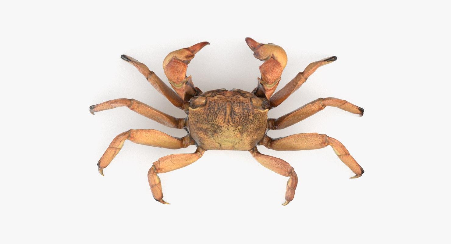 shore crab 3D model