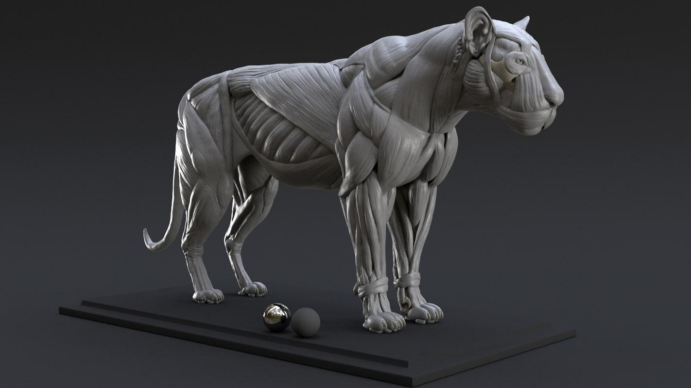 3D model digital lion ecorche study - TurboSquid 1257528