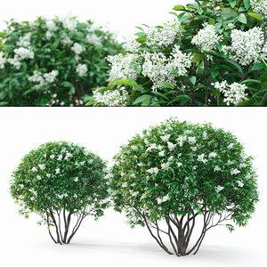 3D ligustrum bush model