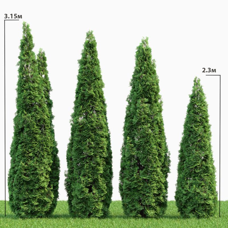 tree thuja 3D model