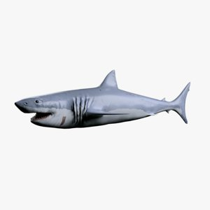 carcharodon carcharias shark obj