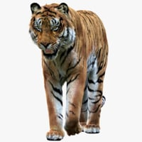 tiger rigged fur 1 3D model