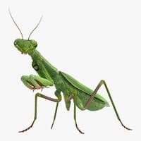 3D model mantis religiosa large hemimetabolic