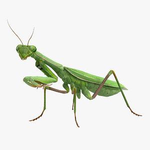 3D mantis religiosa large hemimetabolic model