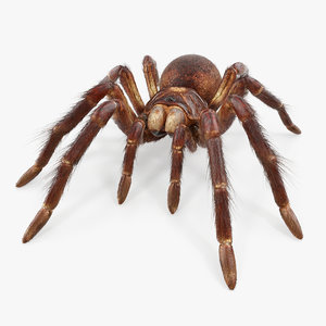 3D goliath birdeater fur