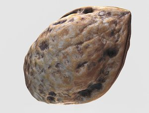 walnut nut model