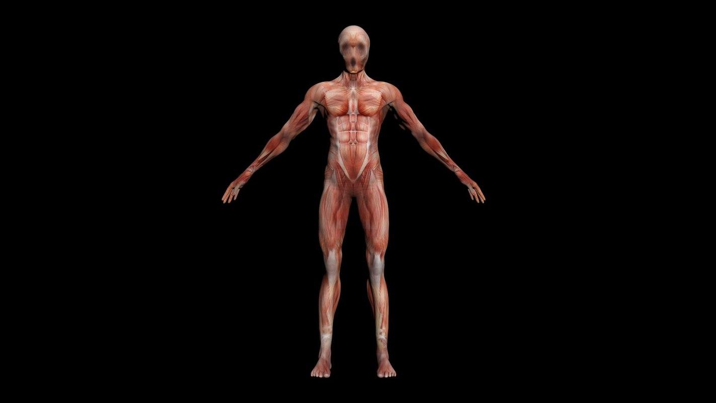 anatomy man horror model