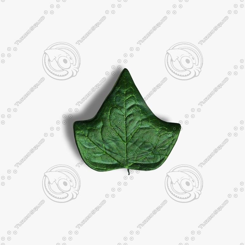 leaf ivy 3ds