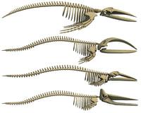 Whales Skeletons Models