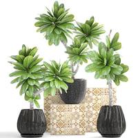 frangipani plants 3D