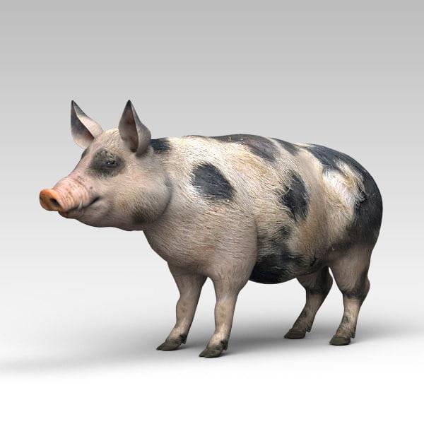 pig animals mammal 3D model