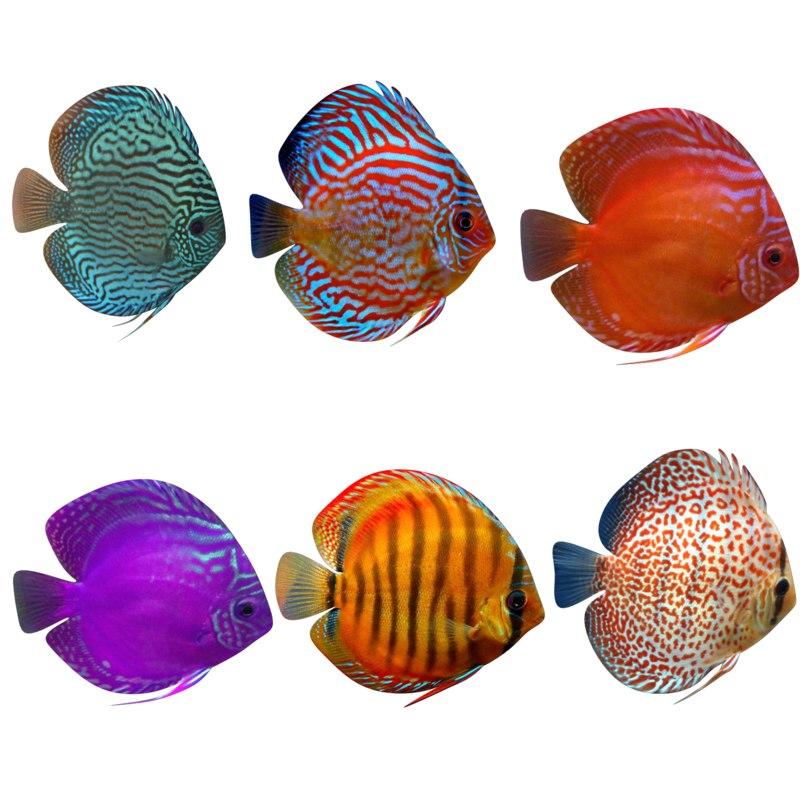 fish aquarium 3D model