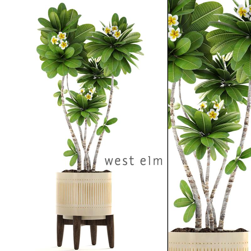 3D frangipani tree