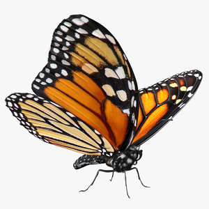 3D monarch butterfly fur