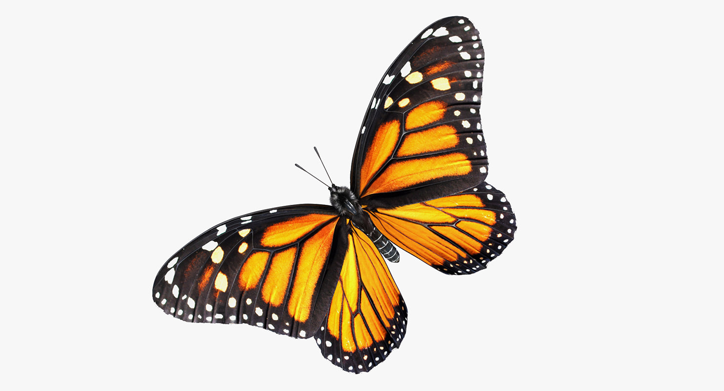 monarch butterfly fur rigged 3D model