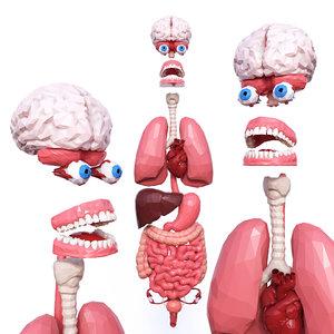 3D internal organs