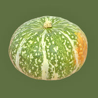 closeup kabocha squash pumpkin model