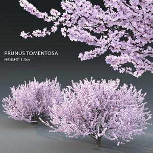 trees prunus 3D model