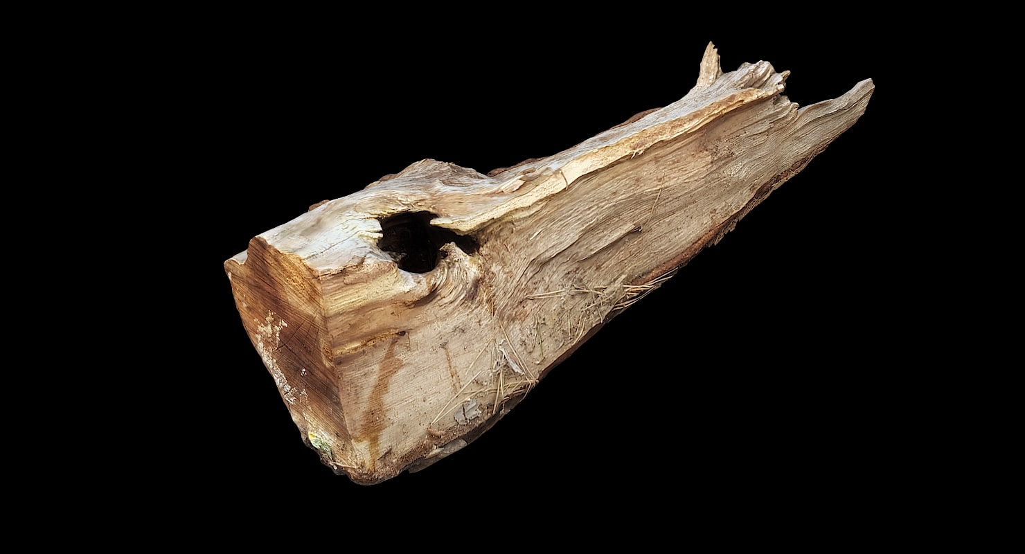 scan wood log model
