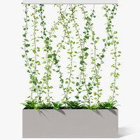 partition plant