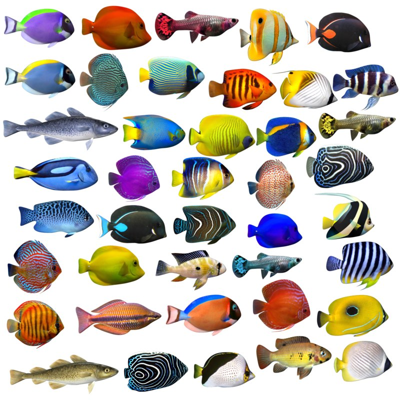 41 fish aquarium model