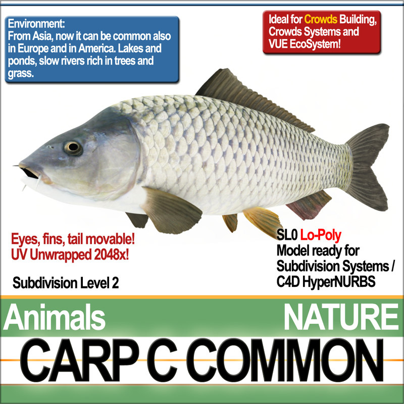 3D carp c common model
