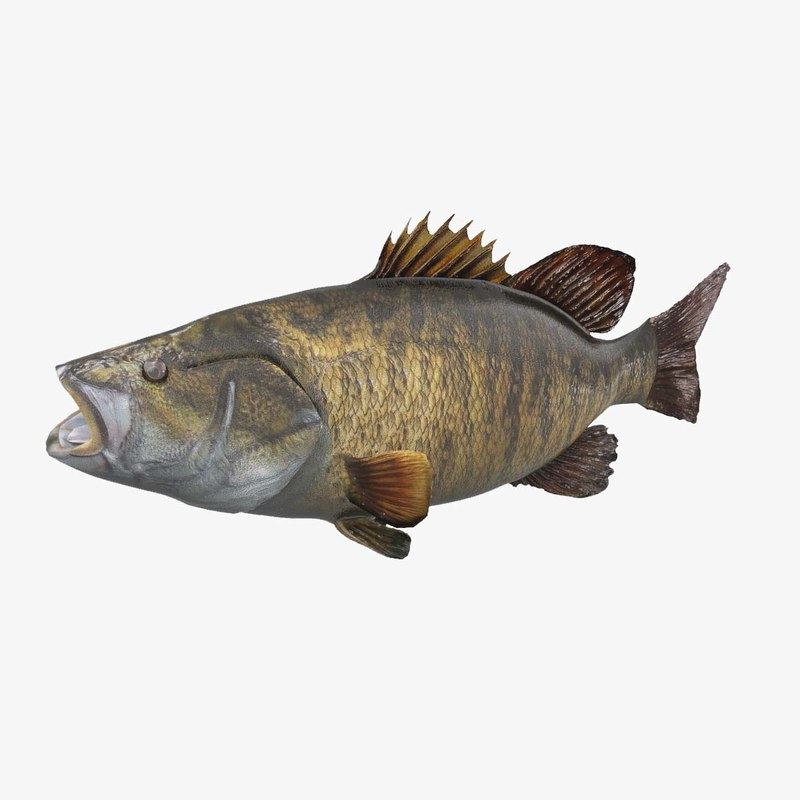 3d model of smallmouth bass