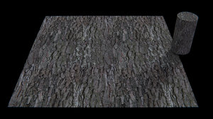 pinus pinea pine bark seamless