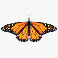 realistic monarch butterfly 3D model