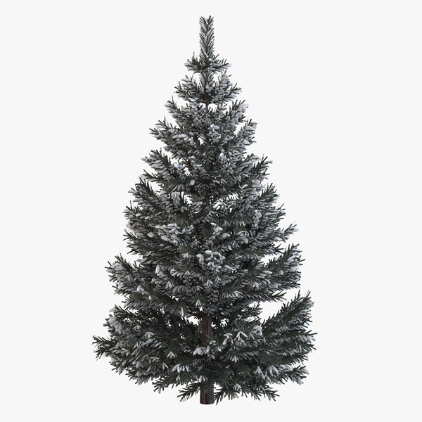 3d pine fir tree snow model