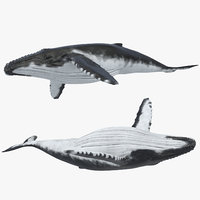 humpback whale rigged 3d model