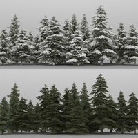 20+20 Cedrus Trees