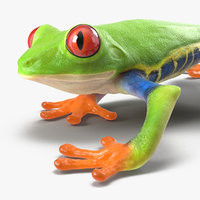 Red Eyed Tree Frog Pose 3 3D Model